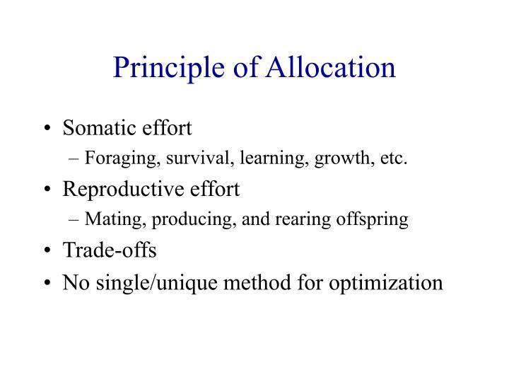 Principle of Allocation