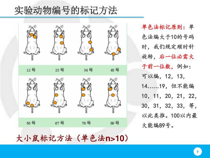 实验动物编号的标记方法