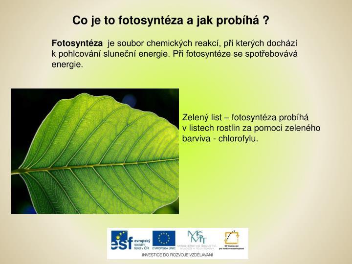 Co je to fotosyntéza a jak probíhá ?