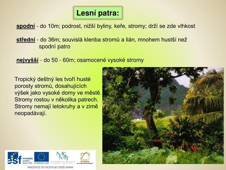 Lesní patra: