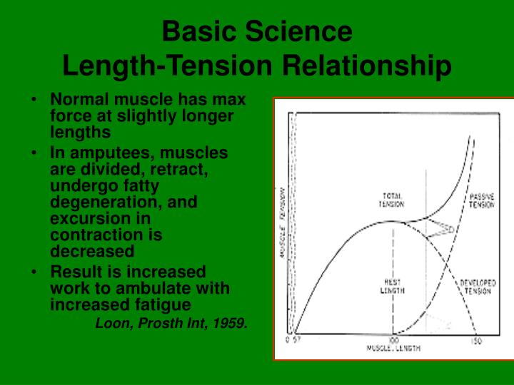 length and tension relationship Get expert answers to your questions in muscle damage, muscle, force and muscle fatigue and more on researchgate, the professional network for scientists.