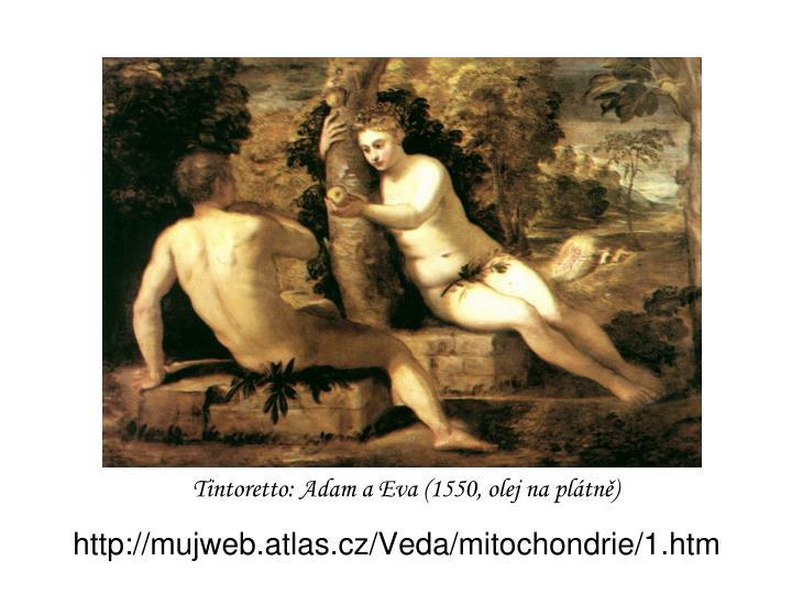 http://mujweb.atlas.cz/Veda/mitochondrie/1.htm