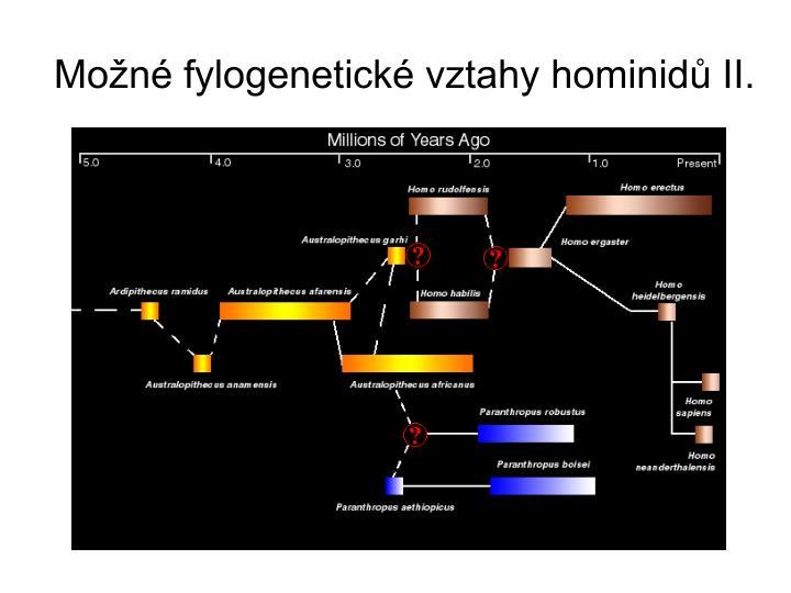 Možné fylogenetické vztahy hominidů II.
