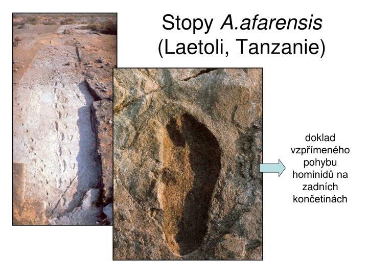 doklad vzpřímeného pohybu hominidů na zadních končetinách