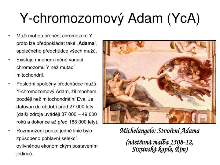 Y-chromozomový Adam (YcA)