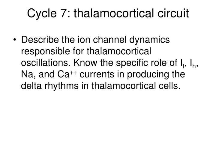 Cycle 7: thalamocortical circuit