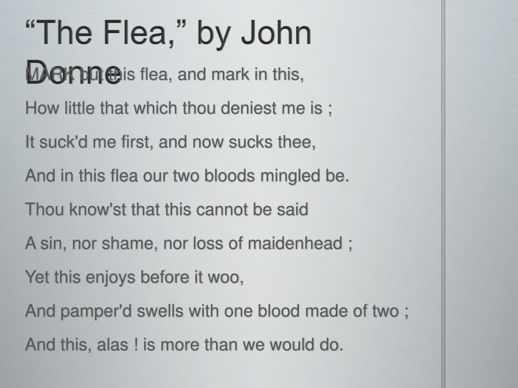 jonne donne the flea