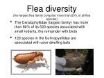 flea diversity the largest flea family comprise more than 20 of all flea species
