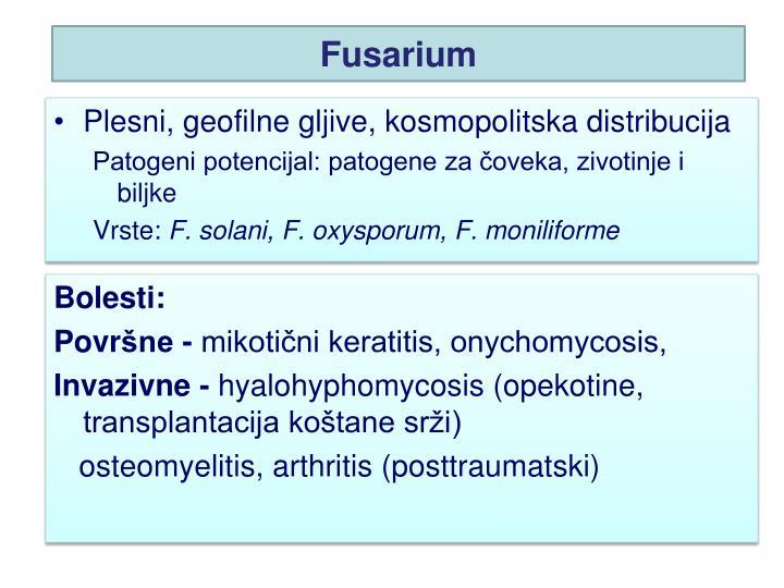 Fusarium