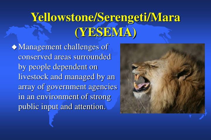 Yellowstone/Serengeti/Mara (YESEMA)