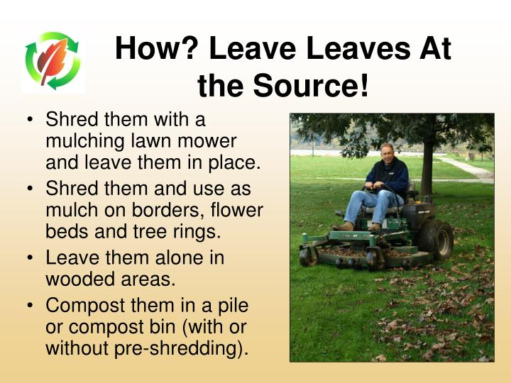 Shred them with a mulching lawn mower and leave them in place.