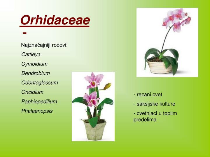 Orhidaceae