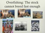 overfishing the stock cannot breed fast enough