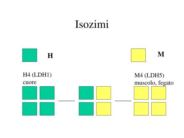 Isozimi