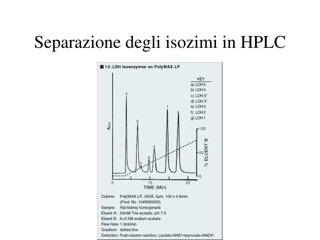 Lattato Deidrogenasi - LDH
