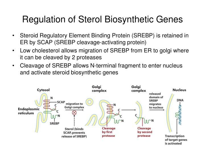 Regulation of Sterol Biosynthetic Genes