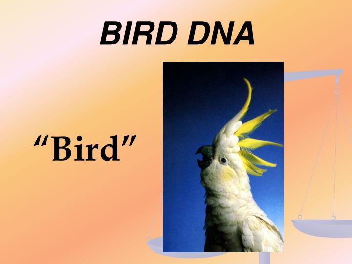 BIRD DNA