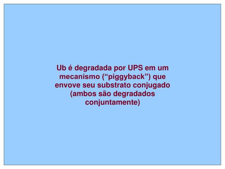 """Ub é degradada por UPS em um mecanismo (""""piggyback"""") que envove seu substrato conjugado (ambos são degradados conjuntamente)"""
