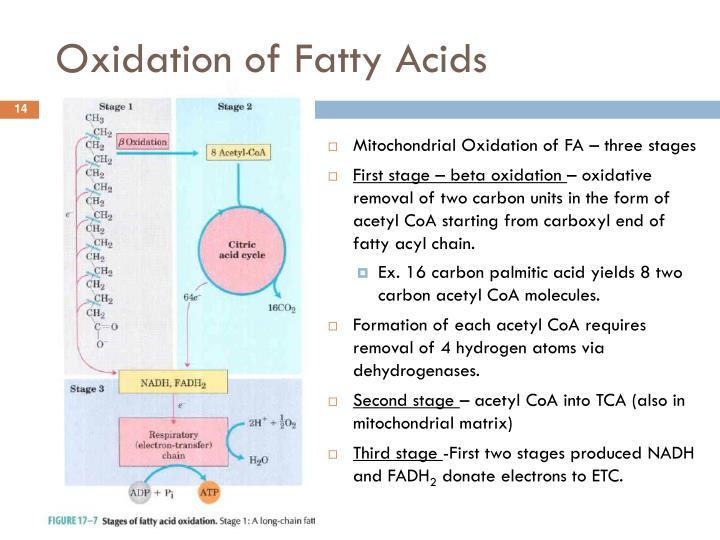 Oxidation of Fatty Acids