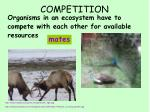 competition2