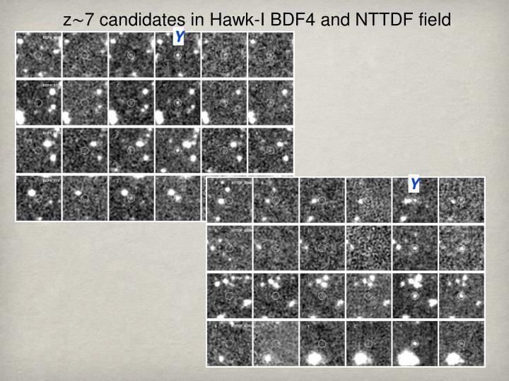 z∼7 candidates in Hawk-I BDF4 and NTTDF field