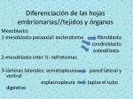 diferenciaci n de las hojas embrionarias tejidos y rganos