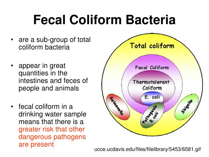 fecal coliform Wd ­dwgb­4­1 2010 interpreting the presence of coliform bacteria in drinking water determining the bacterial quality of drinking water is.