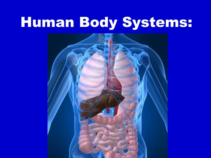 Human Body Systems: