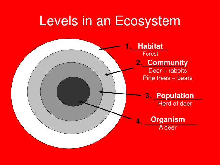Levels in an Ecosystem