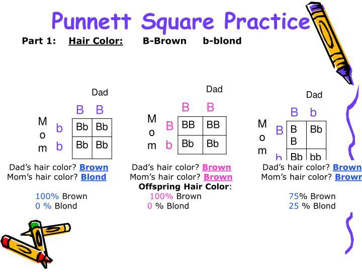 Punnett Square Practice