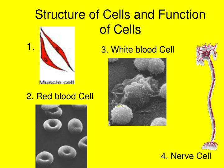Structure of Cells and Function of Cells