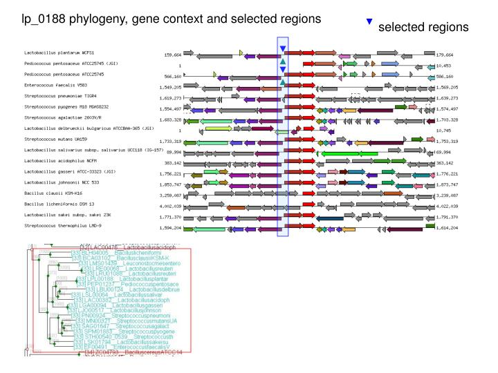Lp_0188 phylogeny, gene context and selected regions