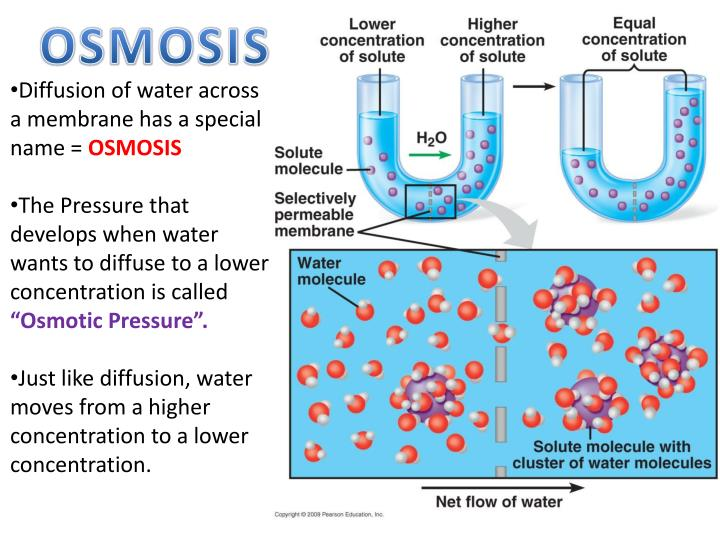 osmosis concentration
