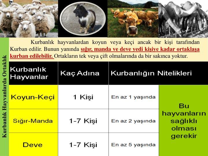 Kurbanlık hayvanlardan koyun veya keçi ancak bir kişi tarafından Kurban edilir. Bunun yanında