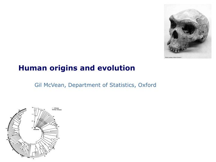 human origins and evolution n.