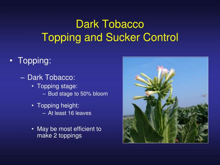 Topping: