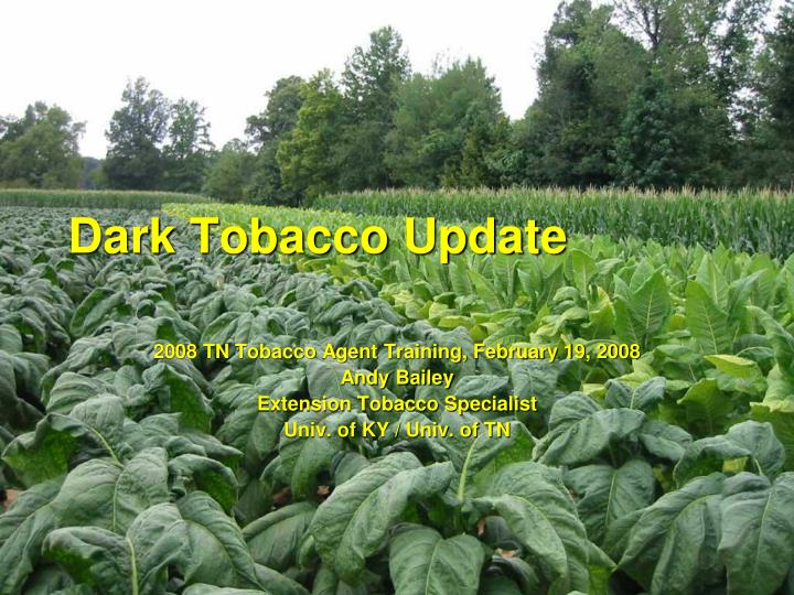 dark tobacco update n.