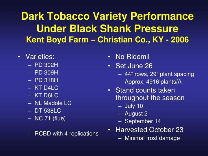 Dark Tobacco Variety Performance Under Black Shank Pressure