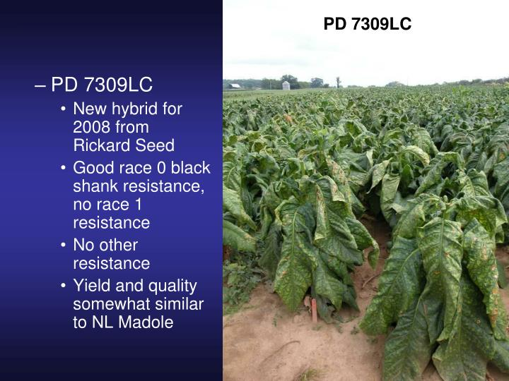 PD 7309LC