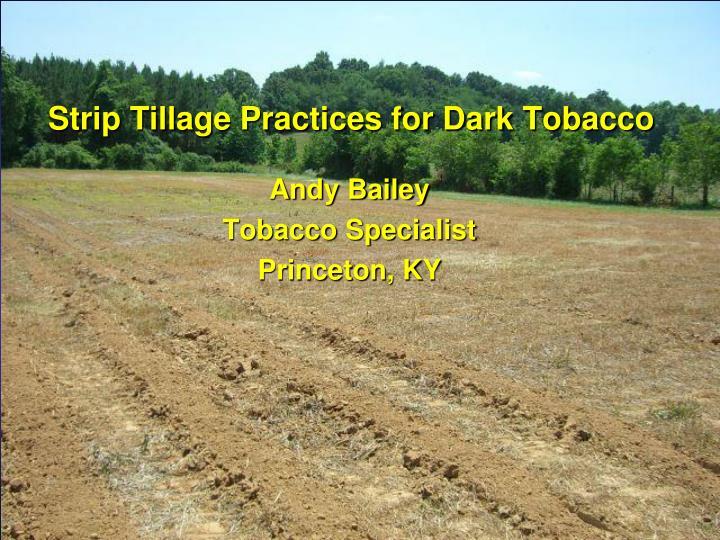Strip Tillage Practices for Dark Tobacco