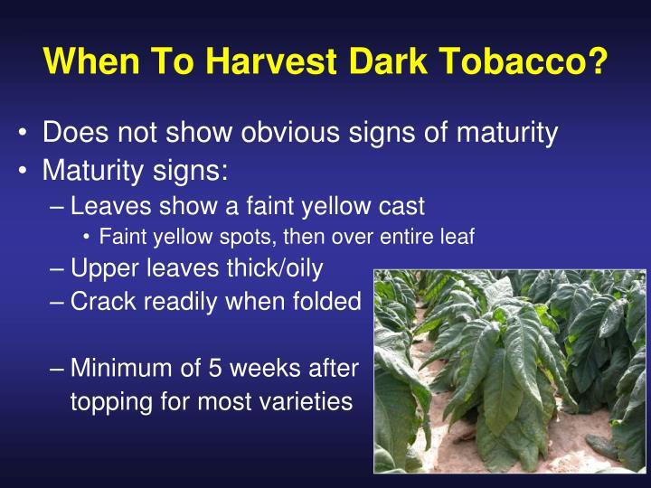 When To Harvest Dark Tobacco?