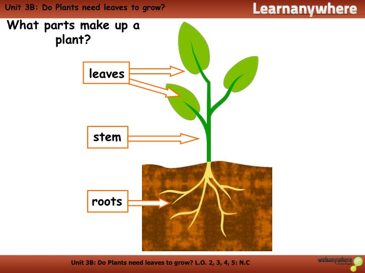 a plant will grow This song is available on curriculum rocks' first grade rocks my plants are growing, from the seeds down in the ground soon they'll be showing how the plant.