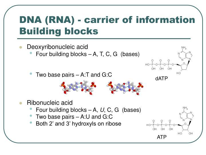 DNA (RNA) - carrier of information