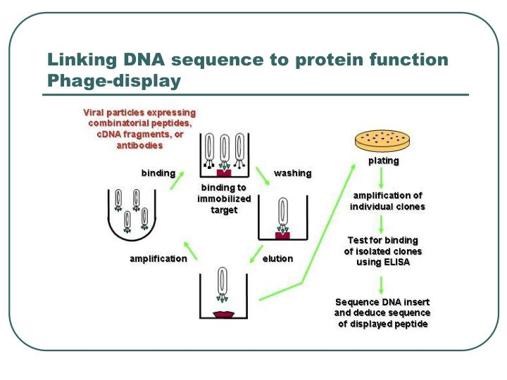 Linking DNA sequence to protein function