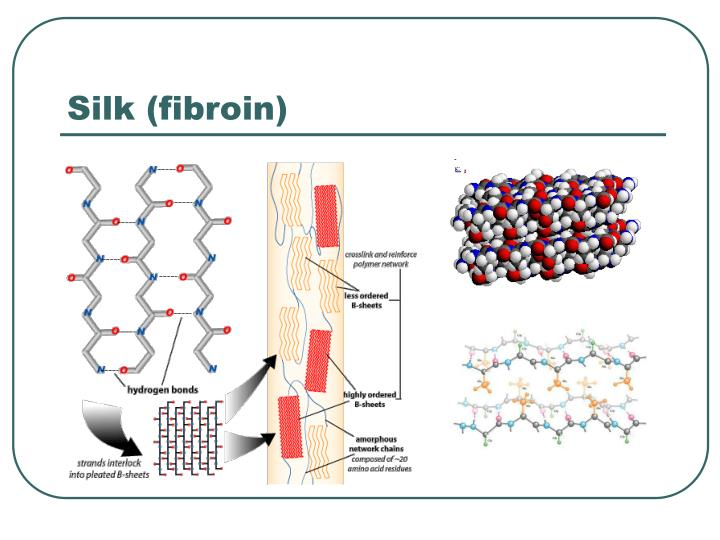 Silk (fibroin)