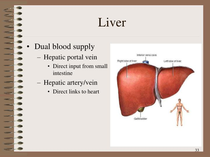 Dual blood supply