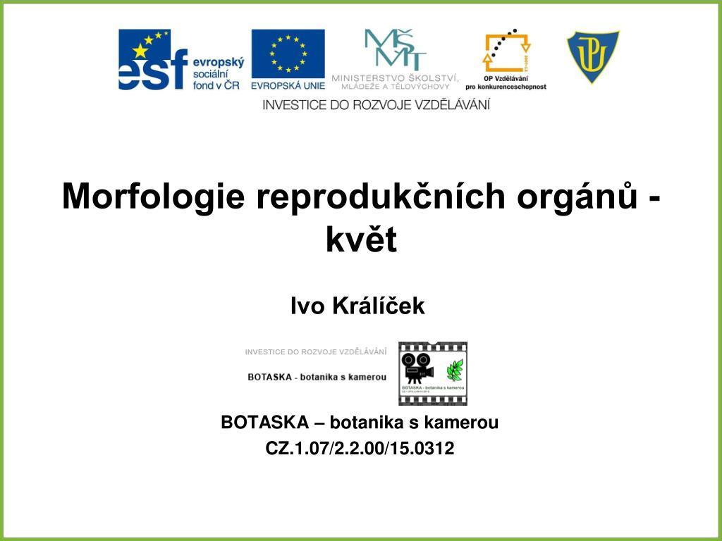 PPT - Morfologie reprodukčních orgánů - květ PowerPoint Presentation ... cf0451711b