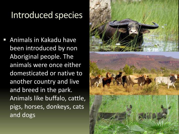 Introduced species