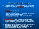 the somesthetic senses