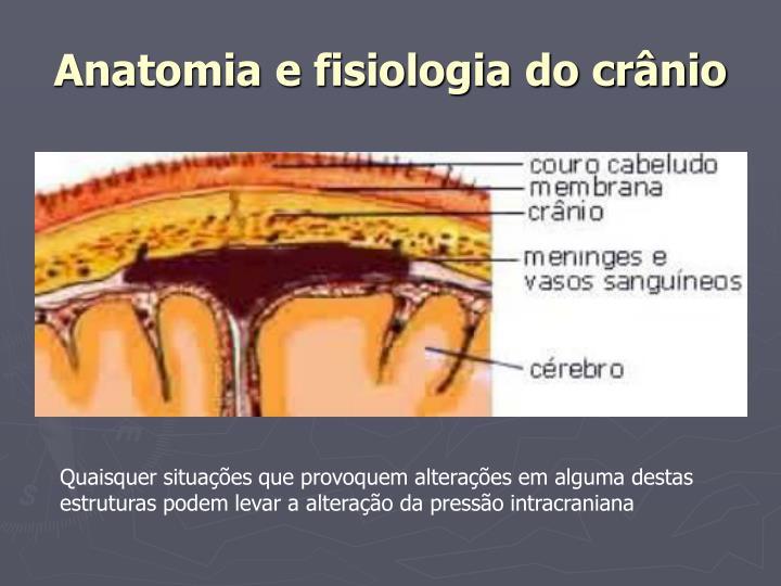 Anatomia e fisiologia do cr nio